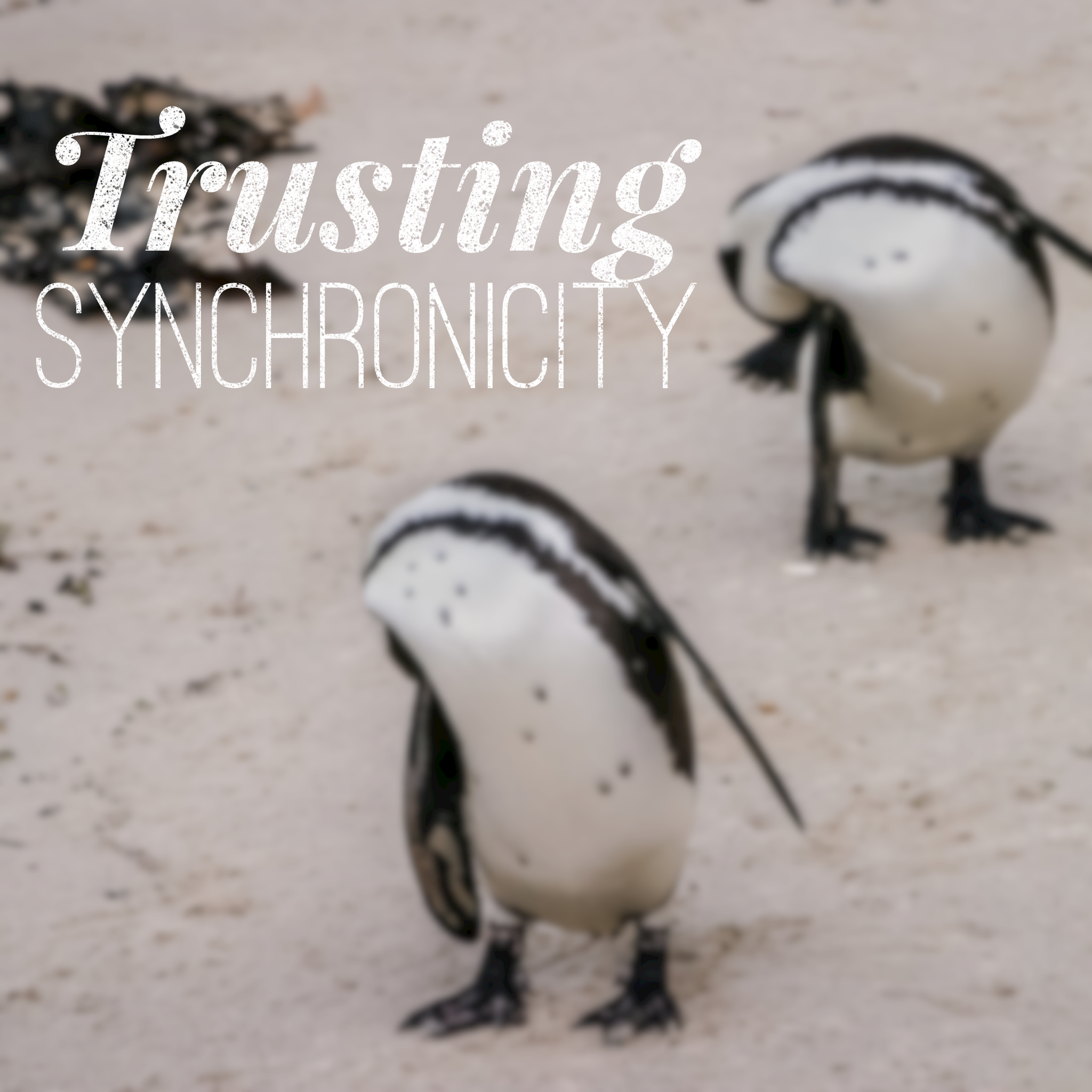 trusting synchronicity